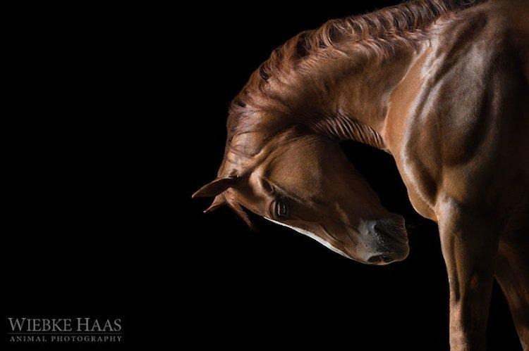 horse-bow