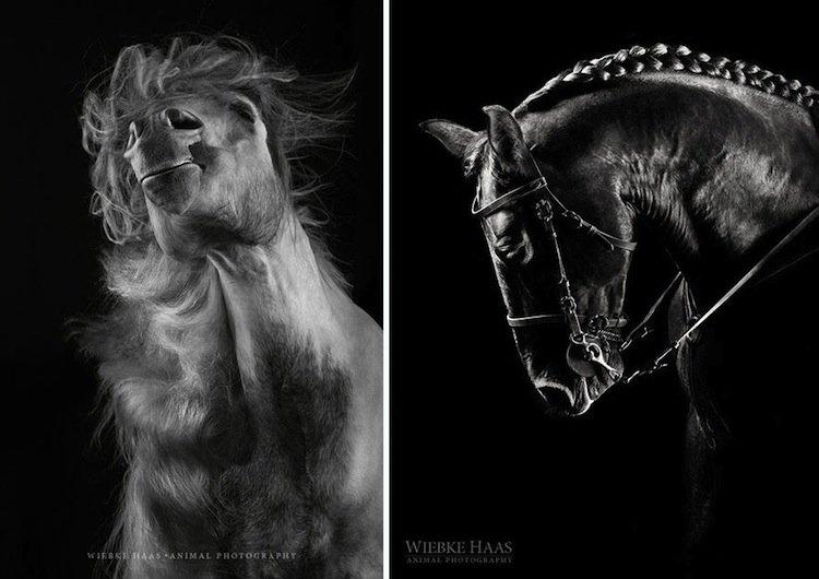 horse-double