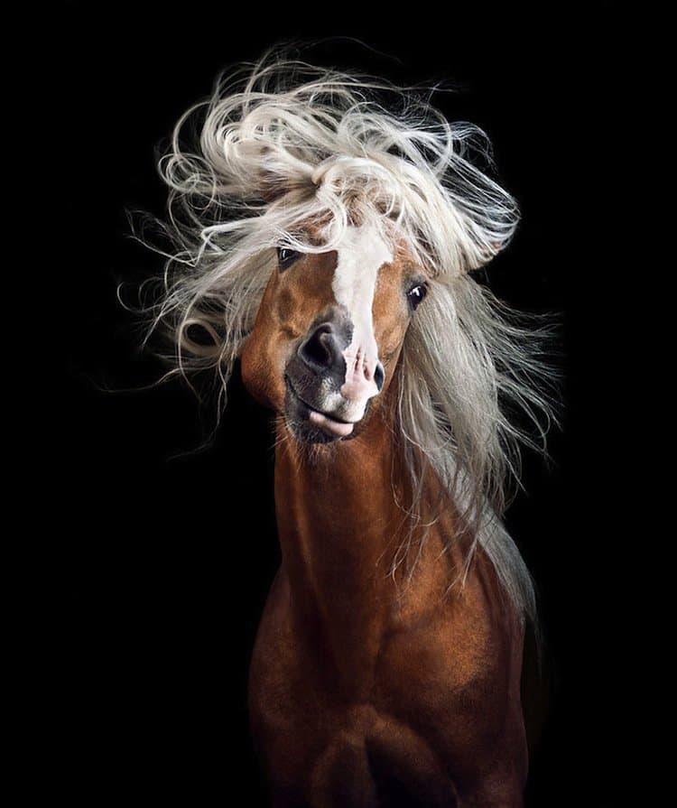 horse-first