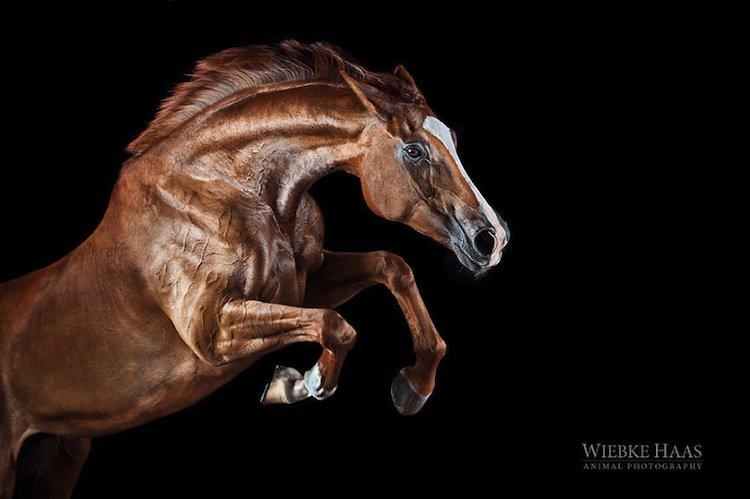 horse-jump