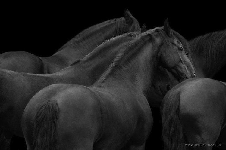 horse-many