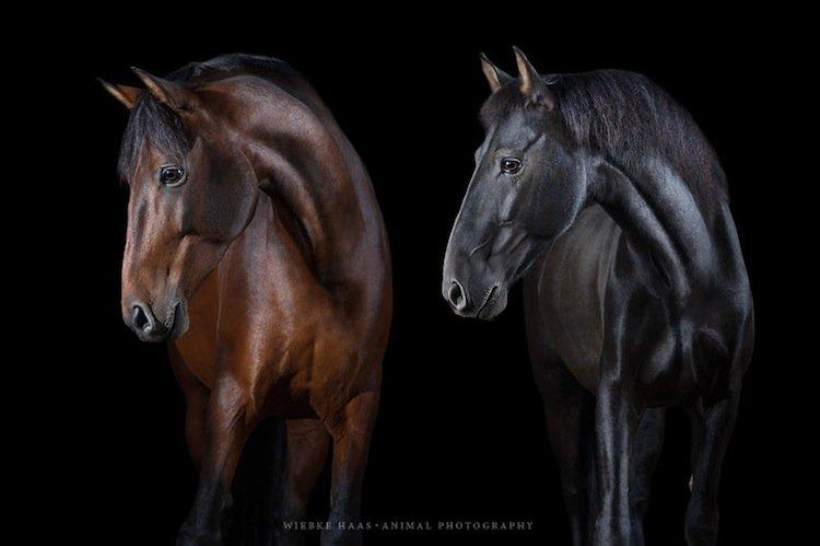 horse-s