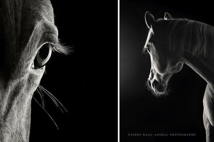 horse-yuma