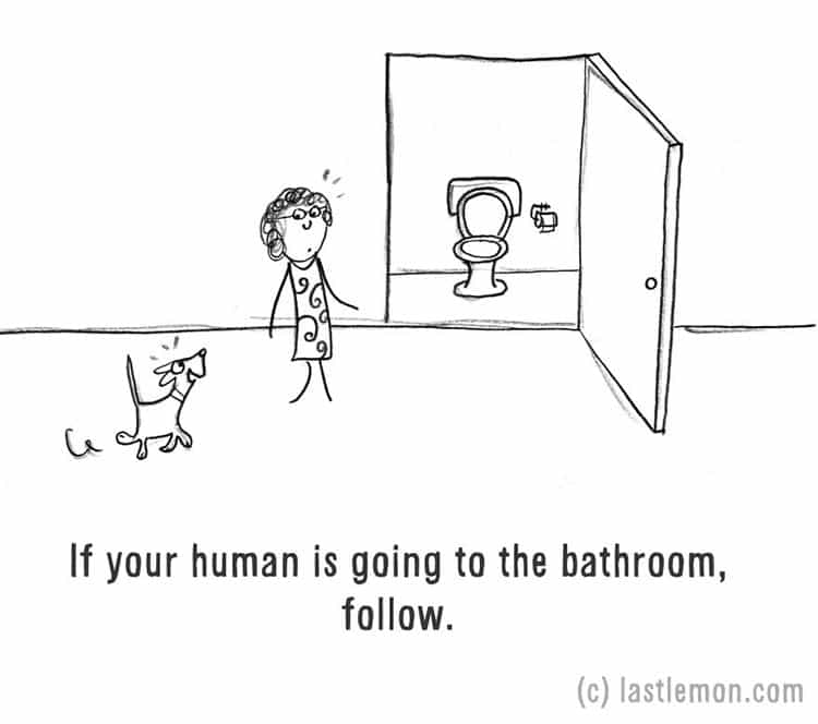 how-to-be-a-dog-bathroom