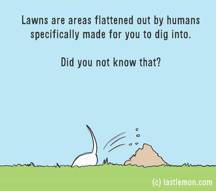 how-to-be-a-dog-lawn