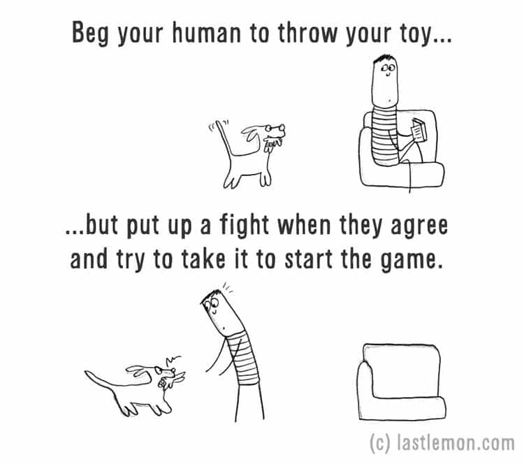 how-to-be-a-dog-throw