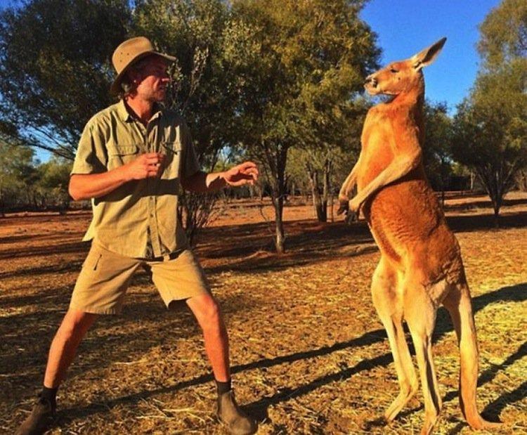 kangaroo-man