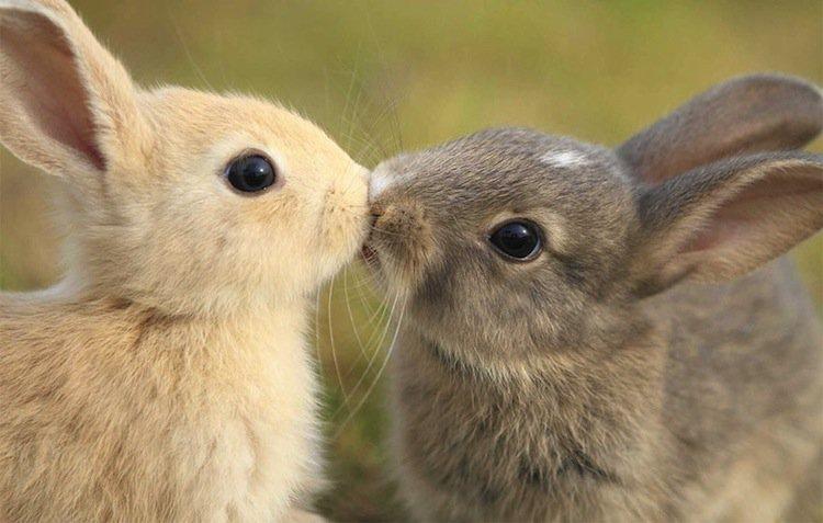 kiss-bunny