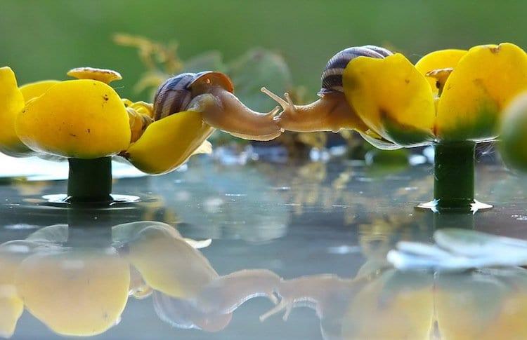 kiss-snail