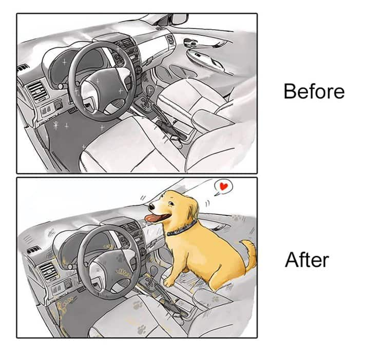 life-before-dog-vs-life-after-dog-car
