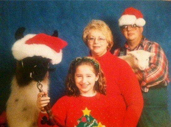 llama lamb family photo