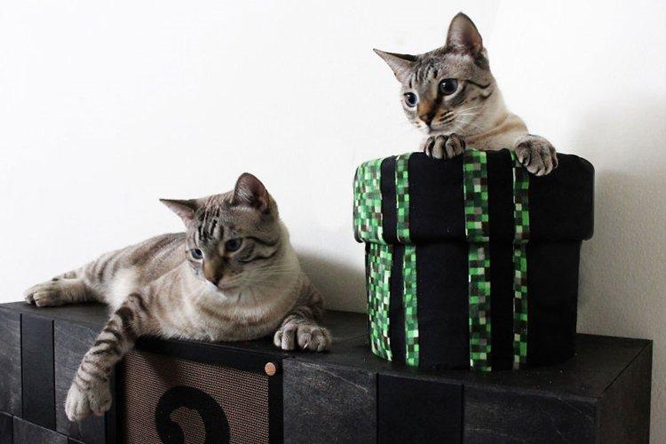 mario-cat-complex-lounge