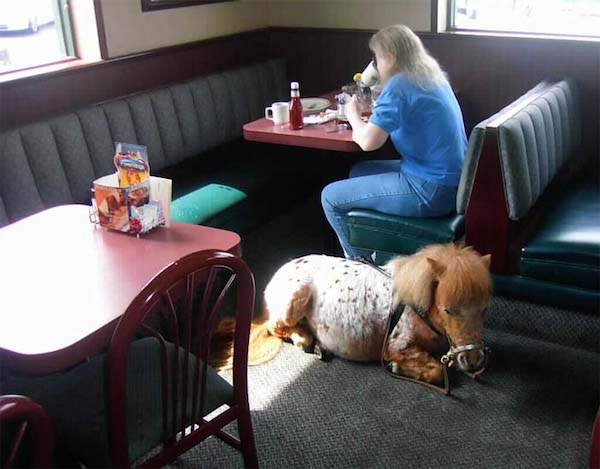 mini horse applebees