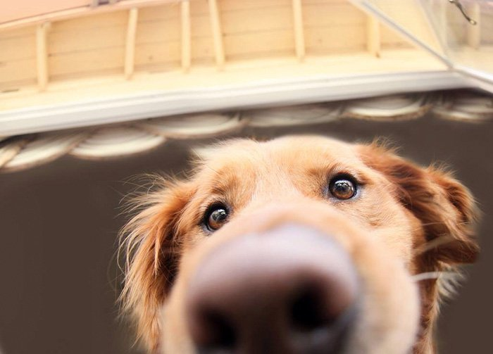 nosy-dogs-close