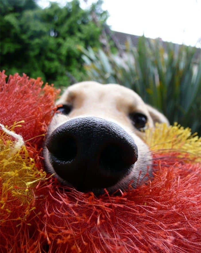 nosy-dogs-floyd