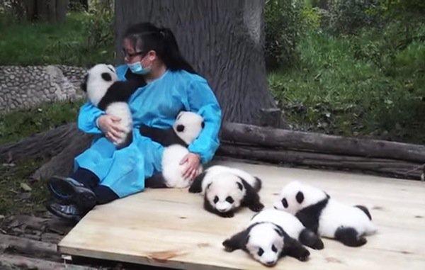 panda-job
