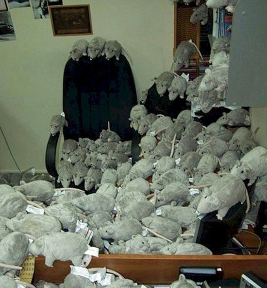 rat plushies office