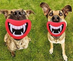 smiling fangs dog toy