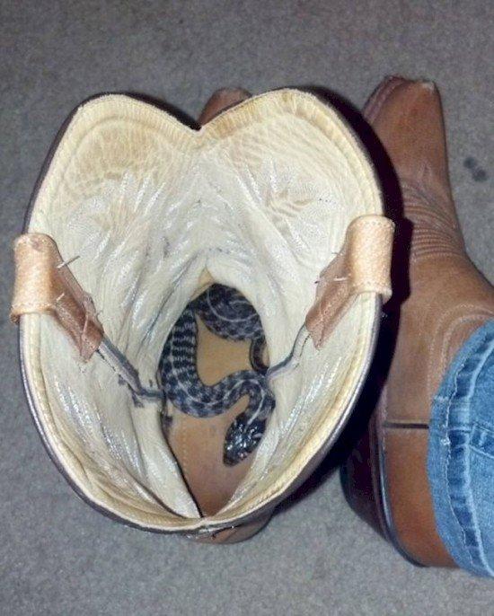 snake in boot