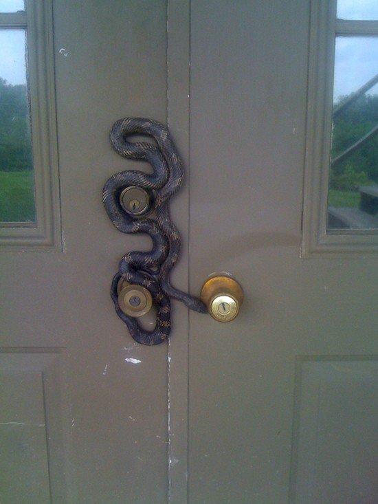 snake on door