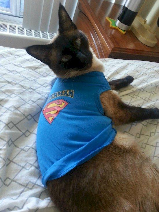 superman cat