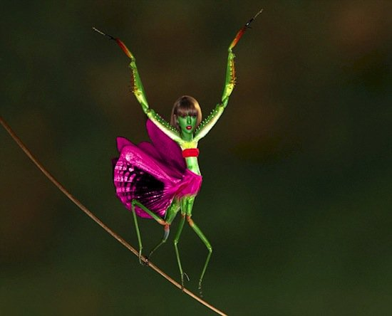 taylor-mantis