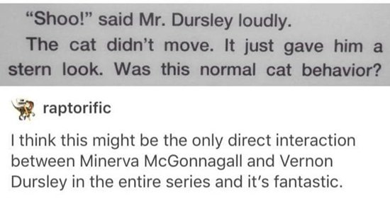 tumblr-harry-potter-cat