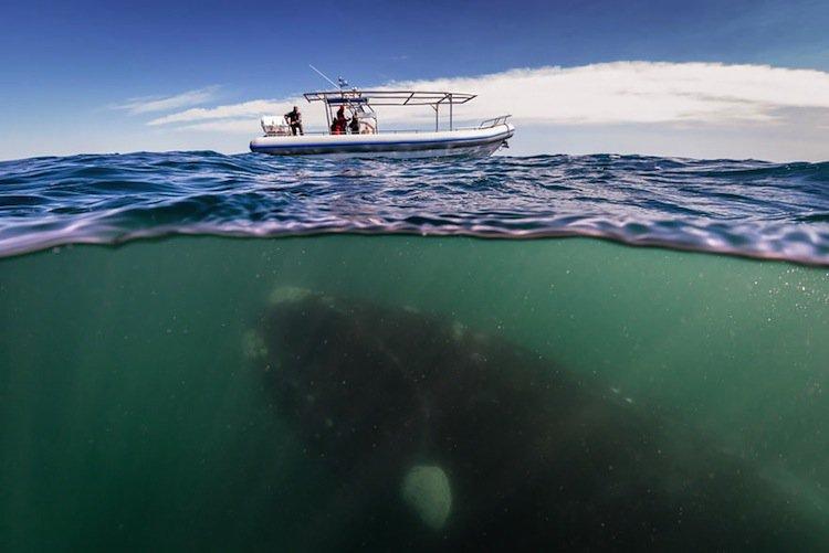 whale-beneath