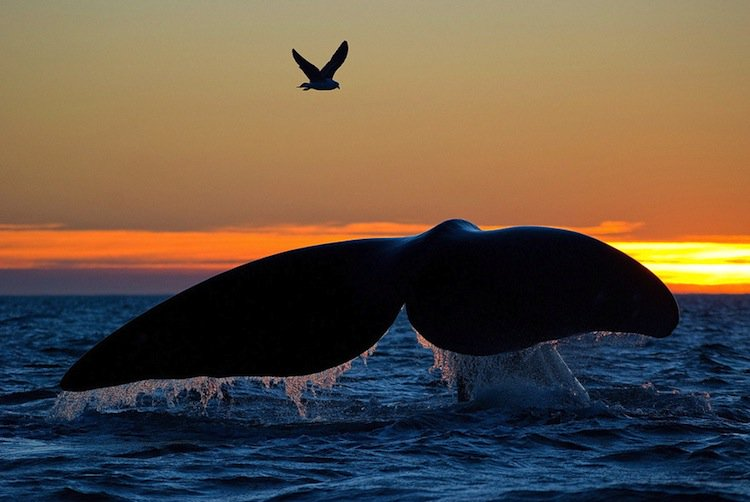 whale- bird