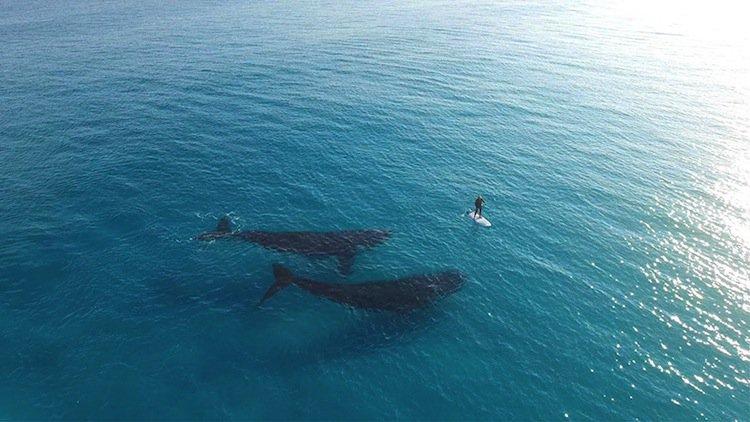 whale-oz