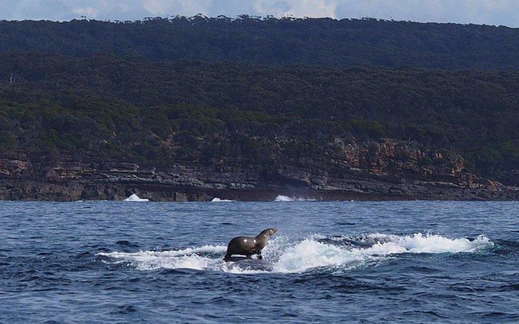 whale-seal