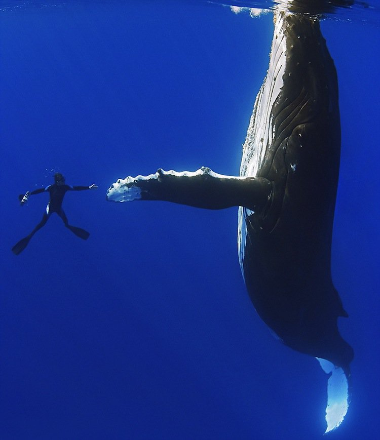 whale-shake