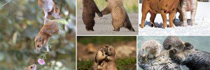 Adorable Animals In Love