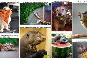 Animals Look Cute Eating