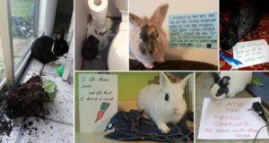 Bunny-Shaming Photos Guilty Rabbits
