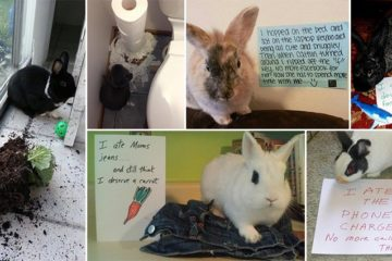 Bunny-Shaming Photos Guilty Rabbits