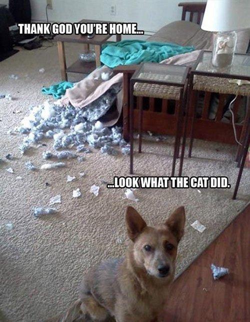 Cat Did