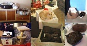 Cats Failing Appreciate Gifts