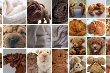 Comparing Dog Inanimate Object