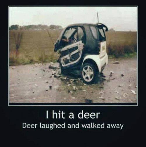 Deer Laughed