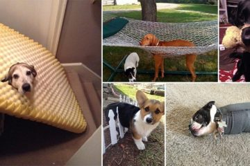 Dogs Acting Casual Being Stuck