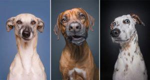 Dogs Photographer Crazy Elke Vogelsang
