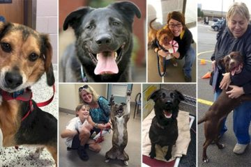 Dogs Pictured Moment Realized Adopted