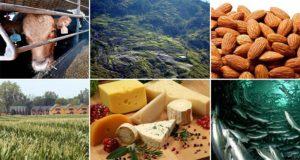 Foods Harming The Environment