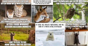 Funny Facts Animals Not True