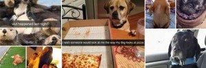 Funny Snapchats Dog-Lovers