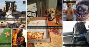 Funny Snapchats Dog-Lovers