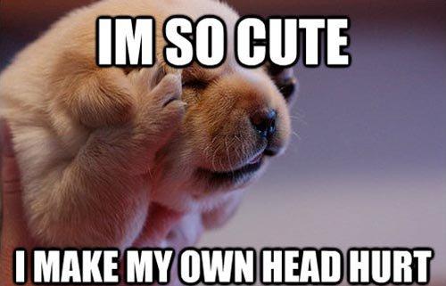 Head Hurt