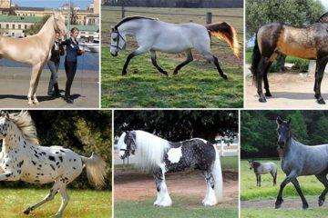 Horses Unusual Coloring