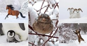 Images Snowy Animals Winter